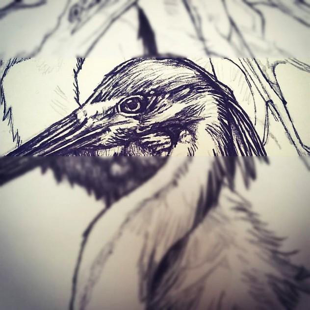 Grand Blue Heron (2)